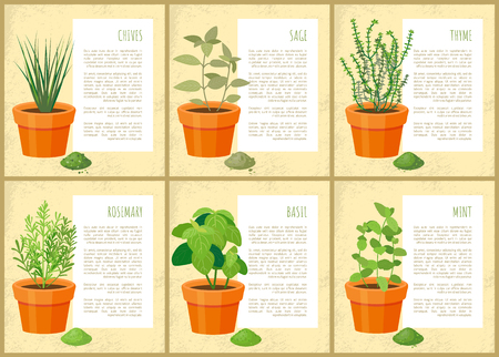 Edible indoor plants used as seasoning for salads. Potten green condiments for dishes with description. Useful house decor vector illustrations set.