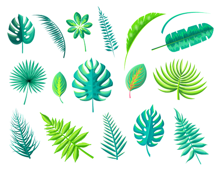 Tropical Foliage Collection Illustration