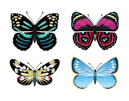 Parantica melaneus collection of butterflies types, morpho peleides and campylotes histrionicus butterfly, vector illustration, isolated on white