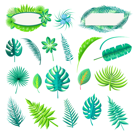Leaf tropical style collection, exotic leaves flower of blue color, monstera and royal fern vector illustration isolated on white background