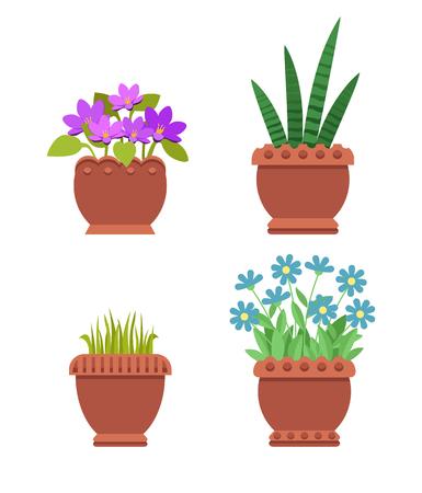 Acattleya and Sansevieria Set Vector Illustration Stock Photo
