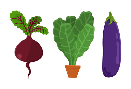Vegetarian food set beetroot, vegetables and eggplant, pot and leaves vegetarian food, collection vector illustration isolated on white background Illustration