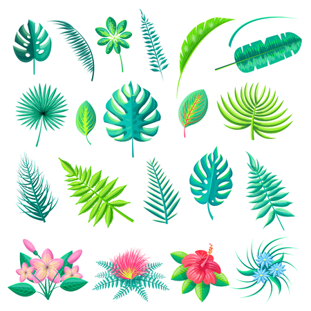 Tropical leaves and flowers collection, branch monstera fern in blossom, vector illustration isolated on white background, exotic flora elements set Иллюстрация