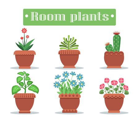 Room plants in pots with blossom and spikes set. Exotic cacti and herbal indoor plants. Potted flowers with bright blossom vector illustrations set.