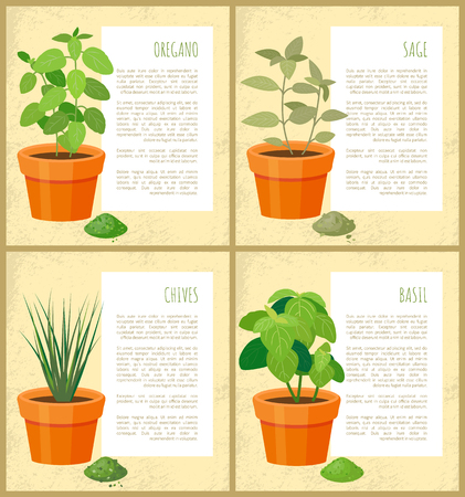 Oregano and sage, basil and chives vector banner, illustration with plants set in brown pots various spices powders text sample greenery ingredient Illustration