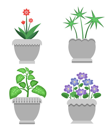 Indoor plants and flowers in ceramic pots set. Natural decoration for interior. Leafy with bright blossom vector illustrations Illustration