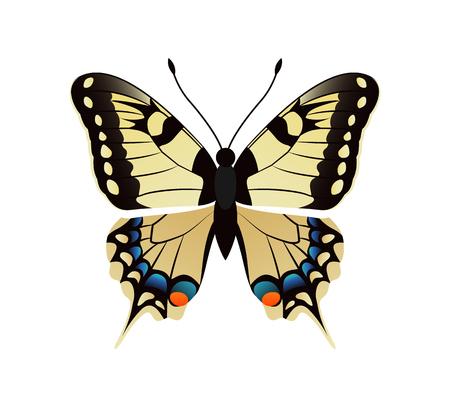 Family Papilionidae Butterfly Vector Illustration Stok Fotoğraf