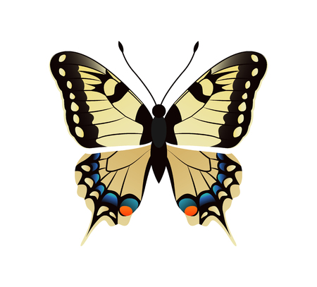 Family Papilionidae Butterfly Vector Illustration Stock Photo