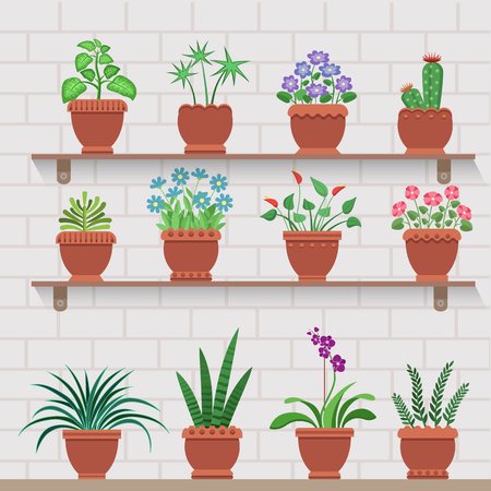 Indoor plants in pots on shelves attached to brick wall. House blossoms decorate interior. Home flowers and leafy herbs vector illustrations set.