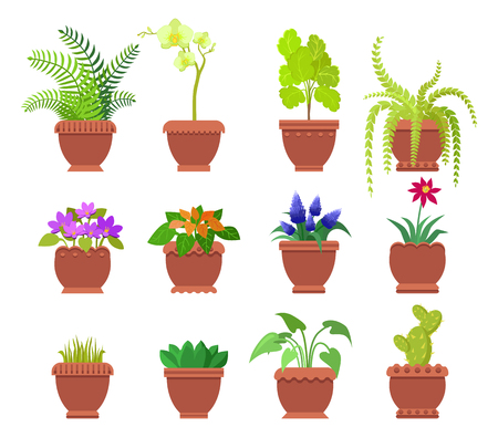 Cactus and collection of plants set, room herbs different types planted in brown pots, leaves and blossom vector illustration isolated on white