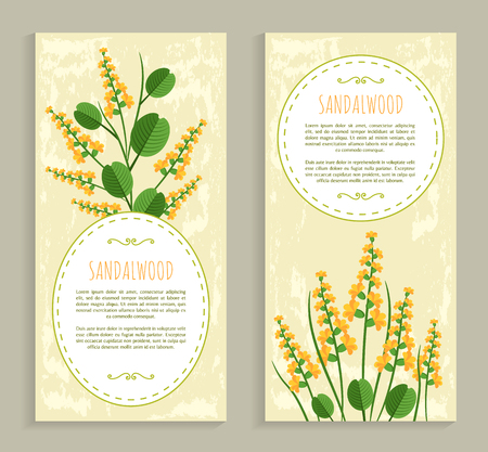 Sandalwood Cards Collection Vector Illustration
