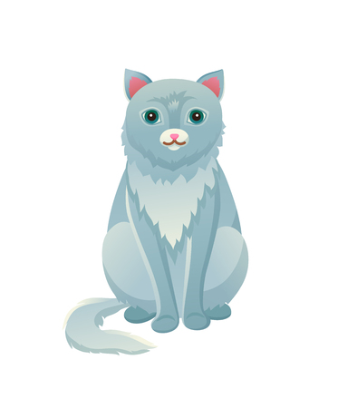 Cat sitting calmly domestic pet, house cat with fur of bluish color, animal and tranquil posture, vector illustration isolated on white background