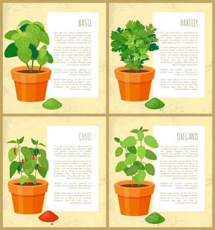 Basil parsley chile and oregano fresh greenery set vector illustration, text sample, various spices collection, fresh greenery leaves, spicy powders Illustration