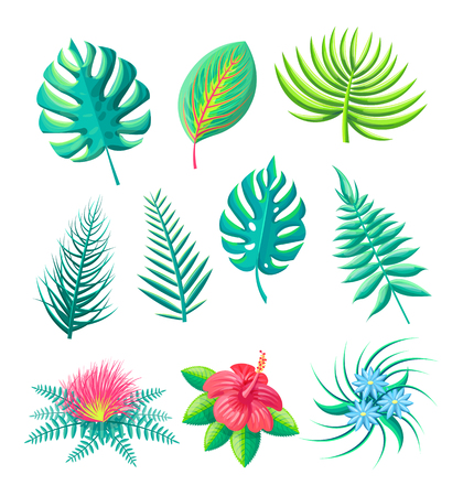 Flower and leaves tropical collection monstera royal fern, types of exotic leaf blossoms set vector illustration isolated on white background