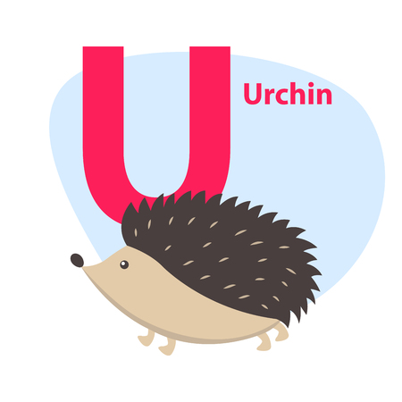 Children ABC with cute animal cartoon vector. English letter U with funny urchin flat illustration isolated on white background. Zoo alphabet with hedgehog for preschool education, kids books