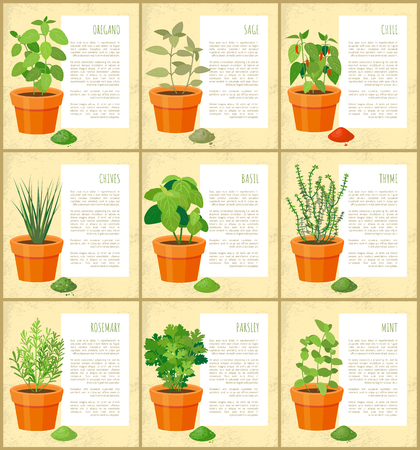 Oregano and sage, chile chives, rosemary parsley, mint posters set, collection of spices types vector illustration condiments poster, fresh seasoning Ilustração