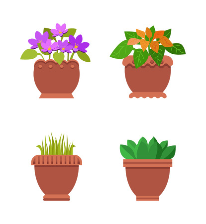 Room Plants in Pots Collection Vector Illustration