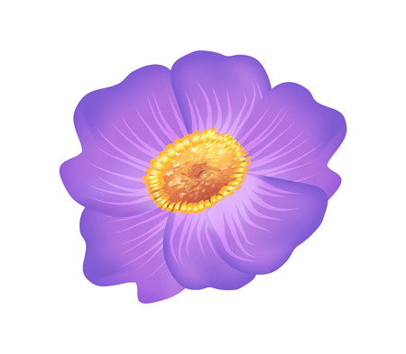 Pasque Purple Flower with Yellow Center Vector