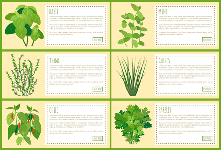 Basil mint and chives, thyme chile and parsley spices greenery with recipe text, vector illustration with various spiciness collection bright rectangles Ilustração