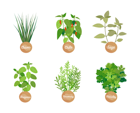 Chives chile, oregano parsley, sage and rosemary, collection of herbs, set condiments with headlines, vector illustration, seasonings isolated on white