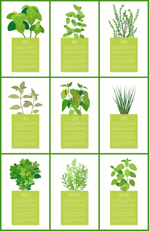Natural fragrant herbal condiments posters set. Tasty spices used in culinary on banners with sample text. Flavored herbs vector illustrations.