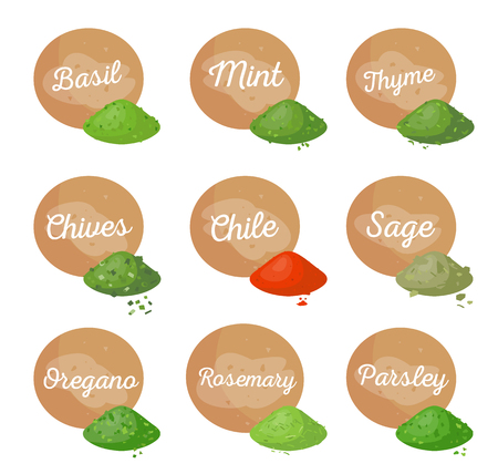 Basil mint spices collection, poster with headlines, rosemary and oregano, parsley and sage, chile chives thyme, isolated on vector illustration