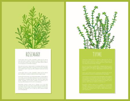 Rosmarin und Thymian Kräuter Vorlage, Vektorkarten, Illustration mit Arten Pflanzen, Grünkraut, Gewürzkraut, Textprobe, Lebensmittelzutaten Gewürze