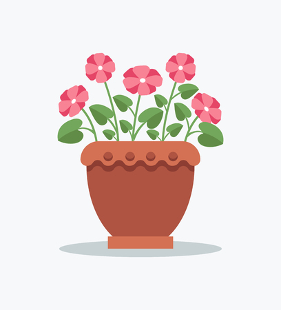 Indoor flowerpot primrose with pink blossom in clay pot. House flower with small leaves. Plant in pot on windowsill isolated vector illustration.