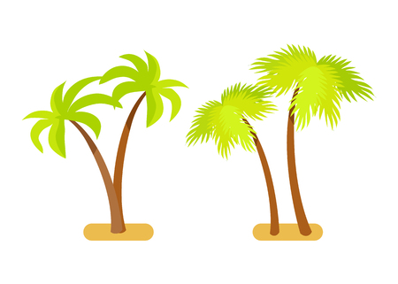 Palm trees collection tropical tre set with branches and leaves, natural exotic plants growing in sand vector illustration isolated on white background Illustration