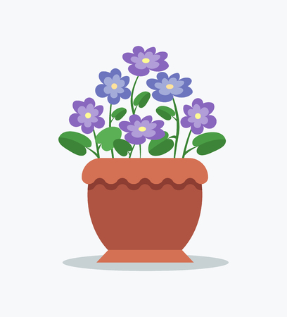 Tender violets with bright blossom in big clay pot. Indoor flower for interior design decoration. Purple buds as house plant isolated vector illustration. Illustration