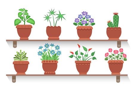 Room Plants Placed on Shelves Vector Illustration