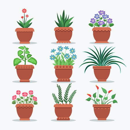 Room Plants Set Flourishing Vector Illustration