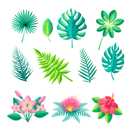 Leaves and flowers collection set leaf of tropical style flourishing blossoms monstera schefflera arboricola isolated on vector illustration