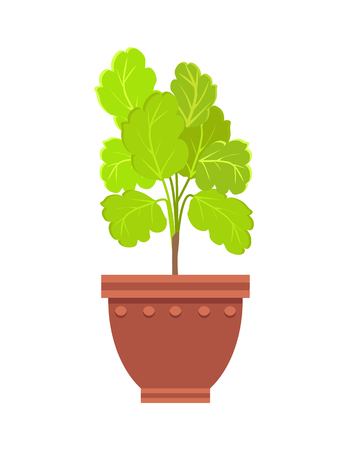 Healthy kalanchoe indoor flowerpot in big clay pot. Leafy plant on thin stem with healing properties. House vegetation for decor vector illustration Ilustração