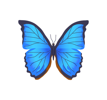 Butterfly of blue color, insect with brightly colored wings, poster with beautiful creature, closeup vector illustration isolated on white background Vettoriali