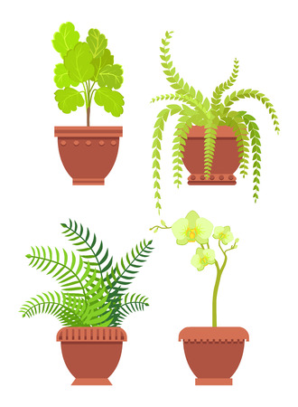Flowers potted in brown pots with ornaments, room plants of fern and orchid types, leaves flourishing elements set isolated on vector illustration