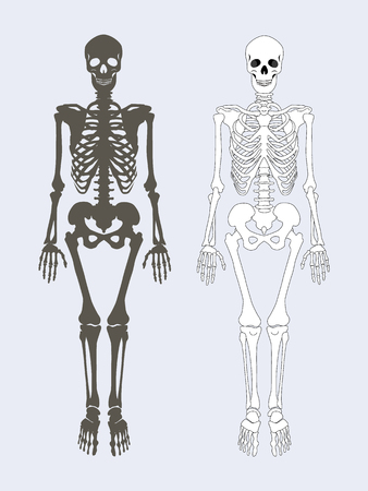 Skeleton of human body black white colors, internal framework supporting organism system with skull, pelvis ribs legs and arms set vector illustration