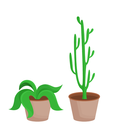 Room plants with leaves set, potted flowers broad leaf, collection of eco elements cactus in pot and green plant isolated on vector illustration