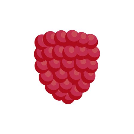 Ripe soft raspberry as healthy detox ingredient. Delicious small summer berry that contains lot of useful antioxidants isolated vector illustration.