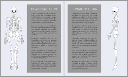 Human skeleton posters set with headline text sample in blocks, skeletal system made of bones, front profile view isolated on vector illustration