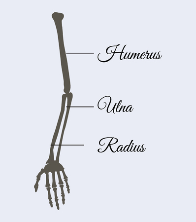 Arm Parts Poster Explanation Vector Illustration Иллюстрация