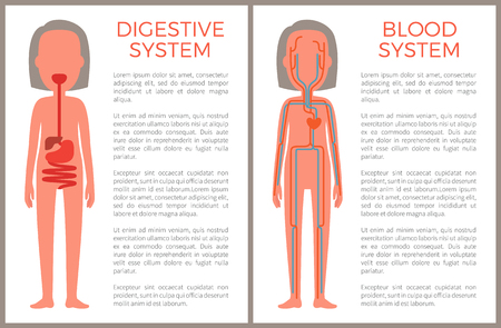 Digestive and blood systems color anatomical image of internal build, female organism arteries set with floating plasma, stomach structure scheme Vetores
