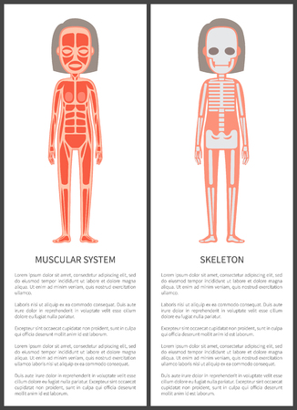 Muscular System and Female Skeleton Colorful Card 일러스트