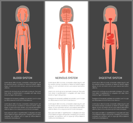 Blood nervous and digestive organism systems set vector illustration of internal view on organs structure, veins nerves brain chart, stomach build