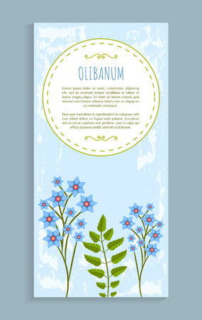 Olibanum leaves and flowers of blue color and herb, headline, resin frankincense vector illustration isolated poster frame for text
