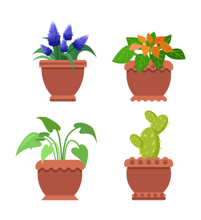 Pseuderanthemum muscari set of room flowers, indoor plants and interior, cactus and flourishing hearb vector illustration isolated on white background