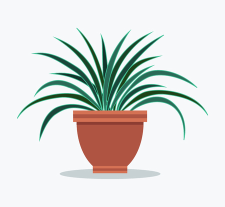 Dracaena house flowerpot with long leaves in clay pot. Tropical palm-like shrub to decorate interior design. Grown plant vector illustration Illustration