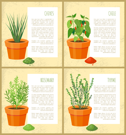 Natural condiments grown pot. Spicy chives, hot chili, fragrant rosemary and piquant thyme on posters with info vector illustrations. Çizim