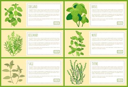 Delicious edible greenery use in culinary. Fresh herbs used as seasoning on banners with sample text. Fragrant natural plants vector illustrations.