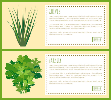Chives and parsley greenery, food condiments set vector illustration of spicy, healthy dish spiciness and herbal twigs text and push buttons